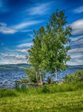 Bilder Norwegen See Sommer Himmel Bäume Gras Hedmark Natur