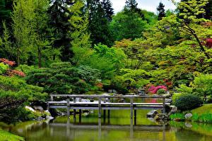Hintergrundbilder Seattle Garten Teich Brücken USA Strauch Bäume Japanese Garden Natur