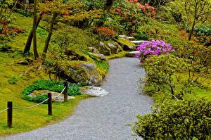 Bilder Seattle Vereinigte Staaten Garten Strauch Japanese Garden Natur