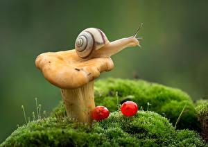 Images Snails Mushrooms Closeup Moss Animals