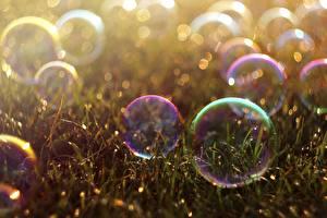 Fotos Seifenblasen Gras Kugeln