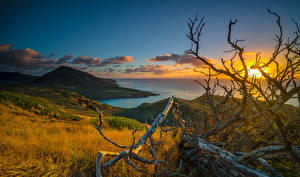 Desktop wallpapers Tropics Sunrises and sunsets Coast Scenery Hawaii Branches Clouds Hill Nature