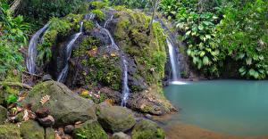 Hintergrundbilder Tropen Wasserfall Steine Felsen Laubmoose Ast Cadet Guadeloupe Natur