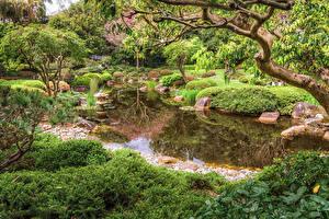Fotos Brisbane Australien Park Teich Strauch Ast Natur