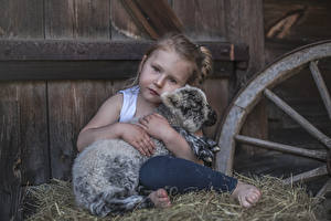 Pictures Cubs Sheep Little girls Staring Sitting Hay Children