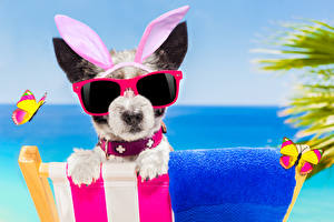 Wallpapers Dogs Butterfly Jack Russell terrier Eyeglasses Rabbit ears Funny animal