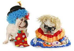 Pictures Dogs White background 2 Bulldog Uniform Eyeglasses Hat Necktie Funny animal