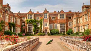 Fotos England Haus Pfauen Palast Kentwell Hall Städte