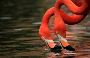 Fotos Flamingos Wasser Rosa Farbe Kopf Zwei