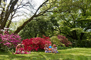 Images Germany Parks Rhododendron Shrubs Doll Little girls Grass Trees Grugapark Essen Nature
