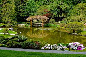 Fotos Seattle Vereinigte Staaten Garten Teich Strauch Bäume Japanese Garden Natur