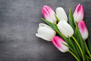 Desktop hintergrundbilder Tulpen Großansicht Blumen