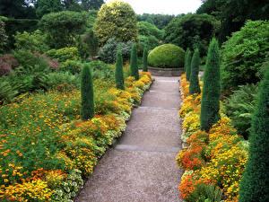 Image United Kingdom Gardens Tagetes Bush Trees Biddulph Grange Garden Nature