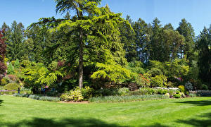 Pictures Canada Park Lawn Spruce Trees Butchart Gardens Nature