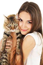 Fonds d'écran Chat domestique Fond blanc Aux cheveux bruns Sourire Voir Filles Animaux