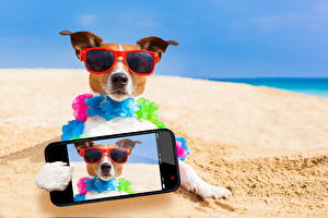 Pictures Dog Beach Jack Russell terrier Smartphones Glasses Selfie animal