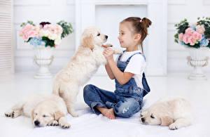 Hintergrundbilder Hund Kleine Mädchen Sitzend Retriever Jeans Welpen Lächeln Kinder Tiere