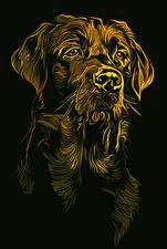 Bilder Hunde Gezeichnet Schwarzer Hintergrund Retriever Tiere