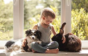 壁纸,,犬,兔,男孩,坐,儿童