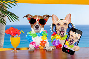 Bilder Hunde Resort Saft Jack Russell Terrier Chihuahua Brille Smartphone Weinglas 2 Selfie Lustige Tiere