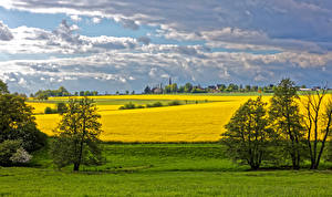 Images Germany Scenery Fields Sky Oilseed rape Trees Clouds Reckershausen Nature