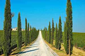 Images Italy Roads Fields Trees Spruce Imbria Nature