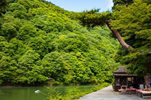 壁纸、、日本、京都市、湖、海岸、Sagano、自然