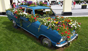 Pictures Petunia Tagetes Cars