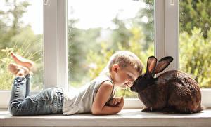 Bilder Kaninchen Fenster Junge Jeans Süß kind