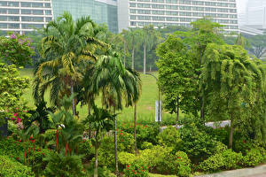 Images Singapore Tropics Gardens Shrubs Trees Gardens By the Bay Nature