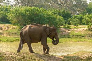 Fotos Sri Lanka Park Elefanten Seitlich Yala National Park Tiere