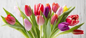 Bilder Tulpen Großansicht Blumen