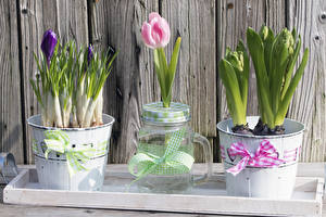 Pictures Tulips Crocuses Wood planks Bucket Bow knot Jar Flowers