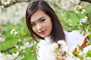 Bilder Asiatische Braunhaarige Gesicht Ast Hübscher junge Frauen