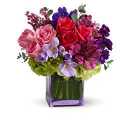 Bilder Sträuße Rosen Freesien Inkalilien Weißer hintergrund Vase Blumen