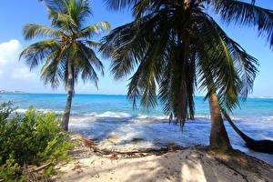Bilder Kolumbien Tropen Küste Wasserwelle Palmengewächse Strände Natur