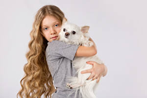 Picture Dog Gray background Little girls Dark Blonde Hair Chihuahua Glance Hug child