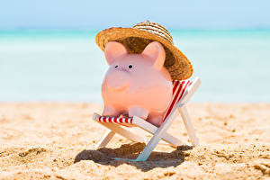 Wallpaper Domestic pig Beach Wing chair Hat Souvenir