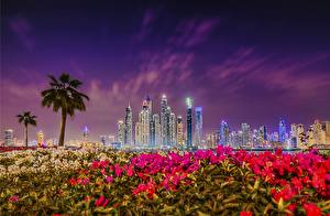 Picture Sky Dubai Emirates UAE Skyscrapers Building Night time Marina Cities