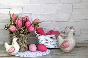 Fotos Ostern Tulpen Haushuhn Ei Weidenkorb Blumen