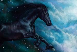 Fotos Pferde Gezeichnet Schwarz Lauf ein Tier