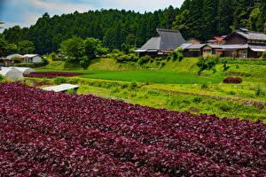 壁纸、、日本、京都市、住宅、畑、Ohara、自然