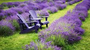 Hintergrundbilder Lavendel Felder Sessel Natur