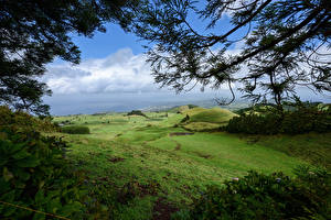 Hintergrundbilder Portugal Grünland Hügel Ast Azores Natur