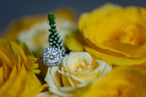 Hintergrundbilder Rose Großansicht Brillant Gelb Ring Blumen