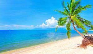 Bilder Meer Strand Palmen Bäume Horizont