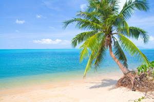 Hintergrundbilder Meer Palmengewächse Strand Bäume Horizont