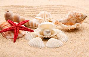 Hintergrundbilder Muscheln Perlen Seesterne Sand