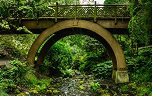 Fotos USA Park Brücke Bäche Rhododendron Garden Portland Natur