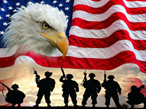 Picture USA Soldiers Birds Flag Beak Silhouette Bald Eagle military